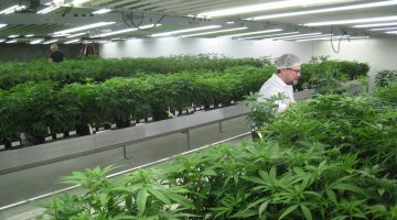 Tips on Commercial Grow Room Design