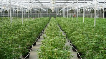 GREENHOUSE ADVANTAGES, & TIPS TO CONSIDER IN DESIGN & BUILD